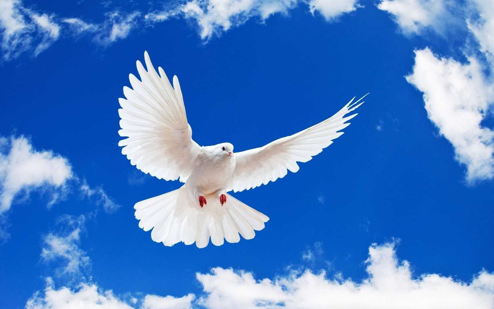 international day of peace logo